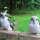 Mother Kookaburra & Young by Bev Pascoe