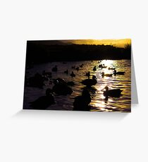 Ducks silhouette sunset  Greeting Card