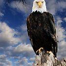 American Bald Eagle by Leann Moses Rardin