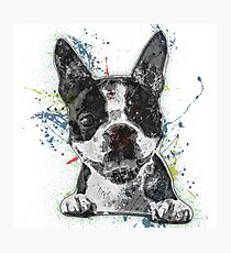 Boston Terrier Paint Splatter Photographic Print