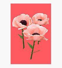 When You Say Nothing At All~ Poppies Photographic Print