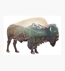 Bison and Independence Mine Photographic Print
