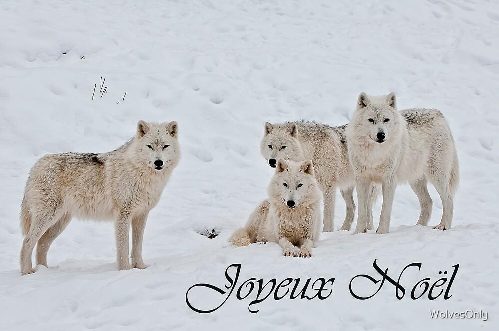 arctic wolf essay