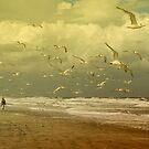 Terns in the Clouds by Deborah  Benoit