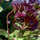 The Colours of Lettuce by jayneeldred