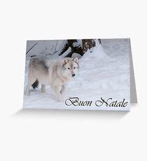 Timber Wolf Christmas Card Italian 1 Greeting Card