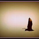 Lone Buzzard by Littlehalfwings