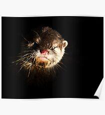 Otter. Poster