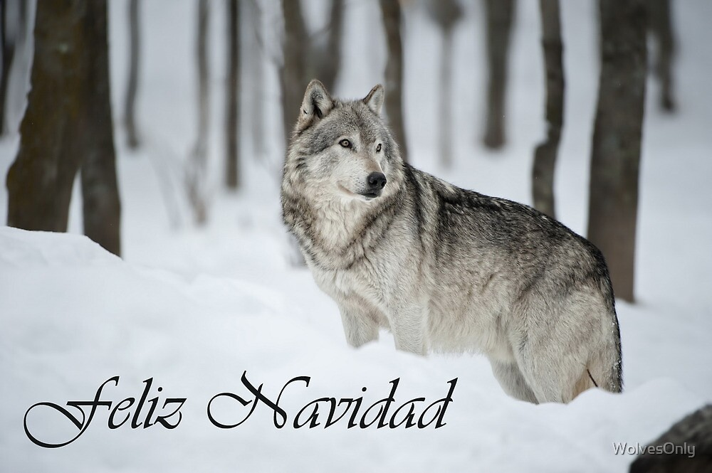 Timber Wolf Christmas Card Spanish 6 by WolvesOnly