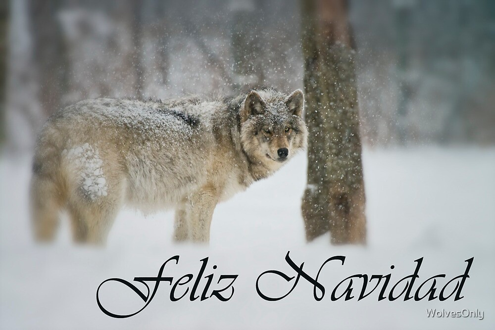 Timber Wolf Christmas Card Spanish 5 by WolvesOnly