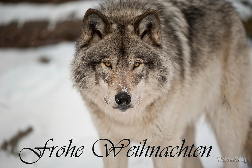 Timber Wolf Christmas Card German 8 by WolvesOnly