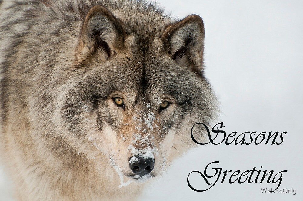 Timber Wolf Seasons Card 9 by WolvesOnly