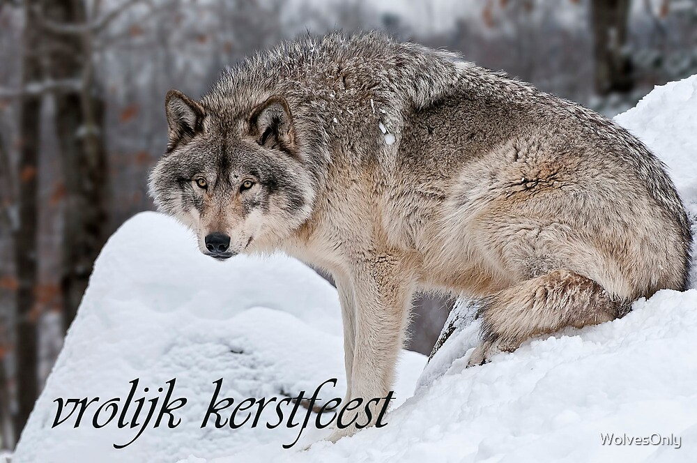 Timber Wolf Christmas Card Dutch 10 by WolvesOnly