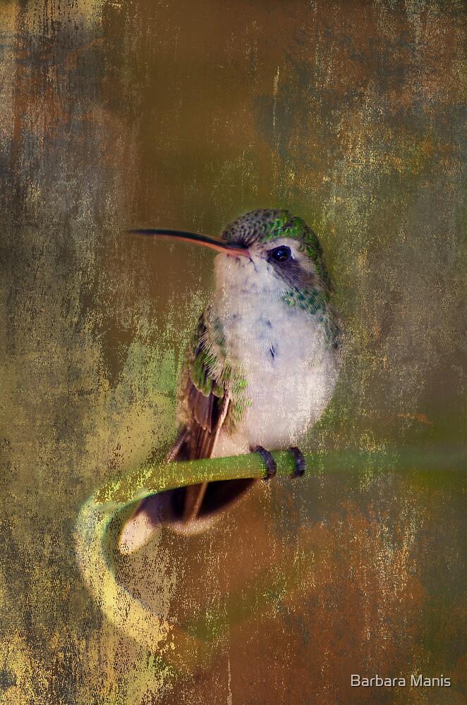 Pretty Hummer by Barbara Manis