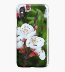 Apricot Blossom At Dawn iPhone Case