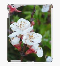 Apricot Blossom At Dawn iPad Case/Skin