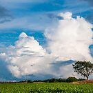Clouds over a Cornfield by Michael Brewer