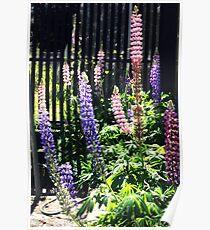 """"""" A Little Corner of My Garden """" Poster"""