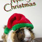 Merry Christmas Guinea Pig by JEZ22