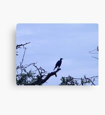 Atop a Perch Artisitc Photograph by Shannon Sears Canvas Print