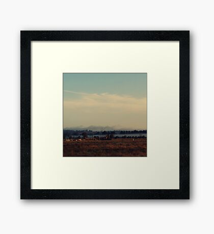 Cattle Yard Framed Print