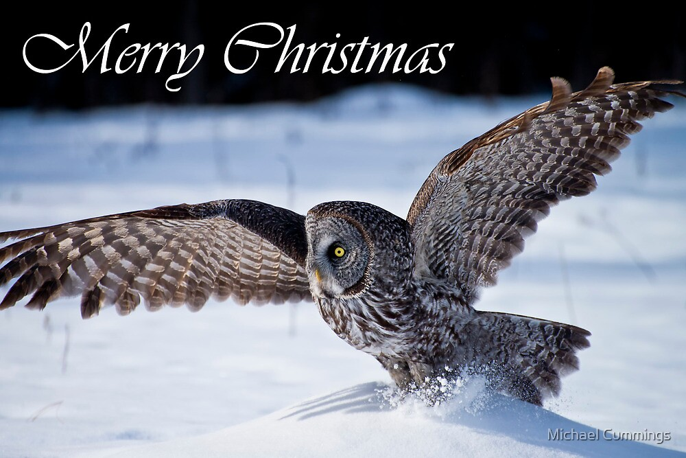 Great Gray Owl Christmas Card 6 by Michael Cummings