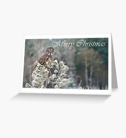 Great Gray Owl Christmas Card 10 Greeting Card