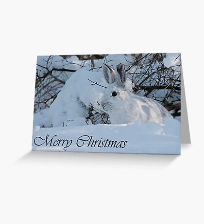 Snowshoe Hare Christmas Card 3 Greeting Card