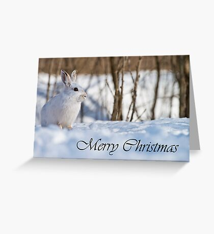 Snowshoe Hare Christmas Card 6 Greeting Card