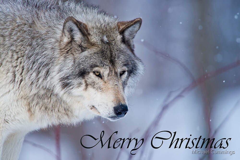 Timber Wolf Christmas Card 3 by Michael Cummings