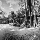 Ta Prohm, Cambodia  by Samuel Gundry