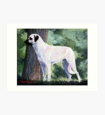 Anatolian Shepherd Dog Art Print