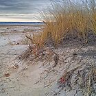 Fall Dunes by Richard Bean