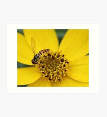 Hover Fly Art Print