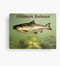 Chinook Salmon Metal Print