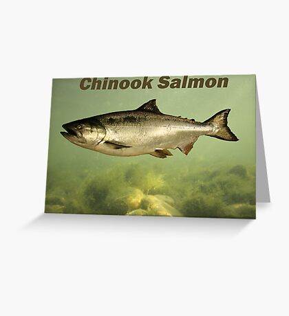 Chinook Salmon Greeting Card