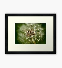 Macro Dandelion  Framed Print