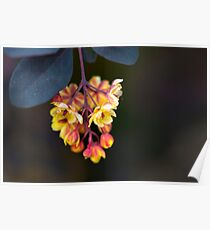 Yellow Flowers Black Leaves Poster