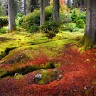 Colorful Carpet of Moss in Benmore Botanical Garden. Scotland by JennyRainbow
