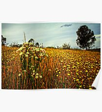 Feather Flowers on The Echidna Trail Poster