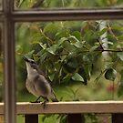 Little Bird by Russell Jenkins