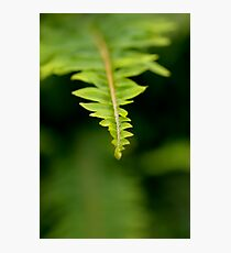 The Green Green Fern Photographic Print