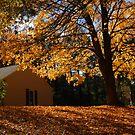 Colors of autumn by Robert D. Kusztos