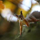 Meeting on the oak tree by Remo Savisaar