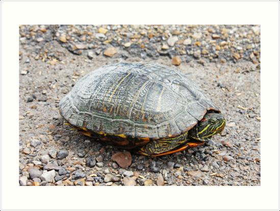 Turtle by Esporeon