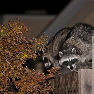 Raccoon - Little Monsters by PhotoMel