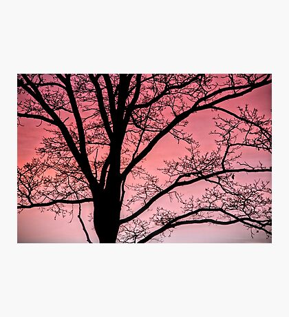 You are tree-mendous Photographic Print