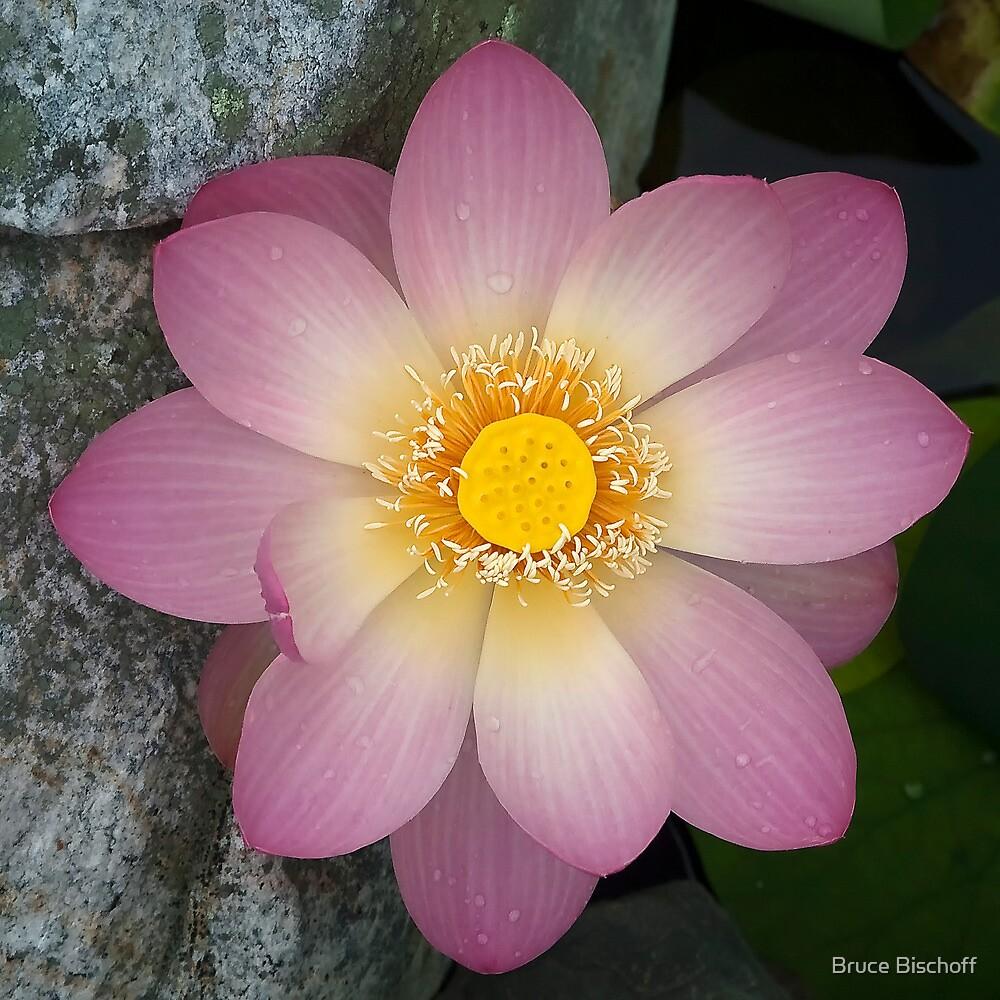 Lotus wheel by Bruce Bischoff