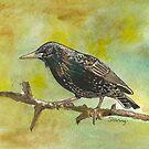 Starling by Sam Burchell