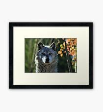 Yellowstone Timber Wolf Framed Print